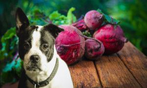 Dürfen Hunde Rote Beete essen