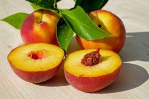 Dürfen Hunde Pfirsich essen