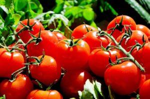 Dürfen Hunde Tomaten essen