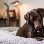 Kinderfreundliche Hunde  - (10 besten Hunderassen für Kinder)