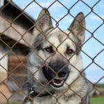 Schutzhund - (Liste der 15 besten Schutzhunderassen)