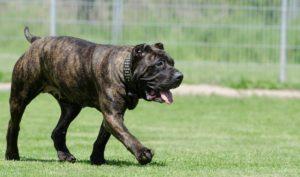 Schutzhunde