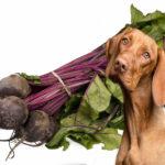 Rüben für Hunde
