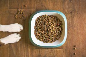 Zubereitung von Hundefutter