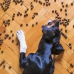 Zusatzstoffe im Hundefutter