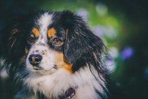 Hunde mit Augenbrauen