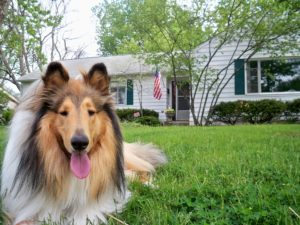 Hunde mit langer Schnauze