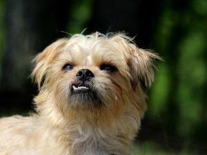 Hunde die nicht haaren