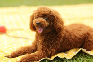 Allergiker Hunde die nicht haaren