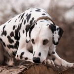 Hunde die nicht stinken - (10 Hunderassen im Vergleich)