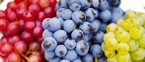 Dürfen Hunde Trauben essen