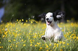 Verspielte Hunderassen: 10 verspielte Hunderassen im Vergleich