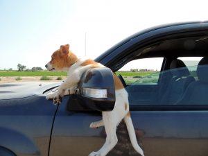 Dumme Hunderassen: Die 11 dümmsten Hunderassen im Vergleich