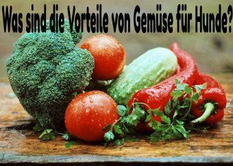 Welches Gemüse dürfen Hunde essen